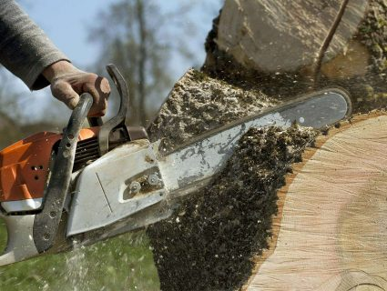 A person sawing through a thick tree trunk with a chainsaw