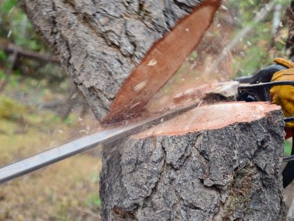 A worker sawing a tree trunk with a chainsaw
