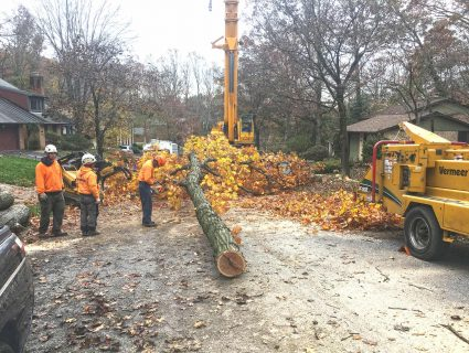 A crew of Hometown Tree workers sawing a tree with chainsaws